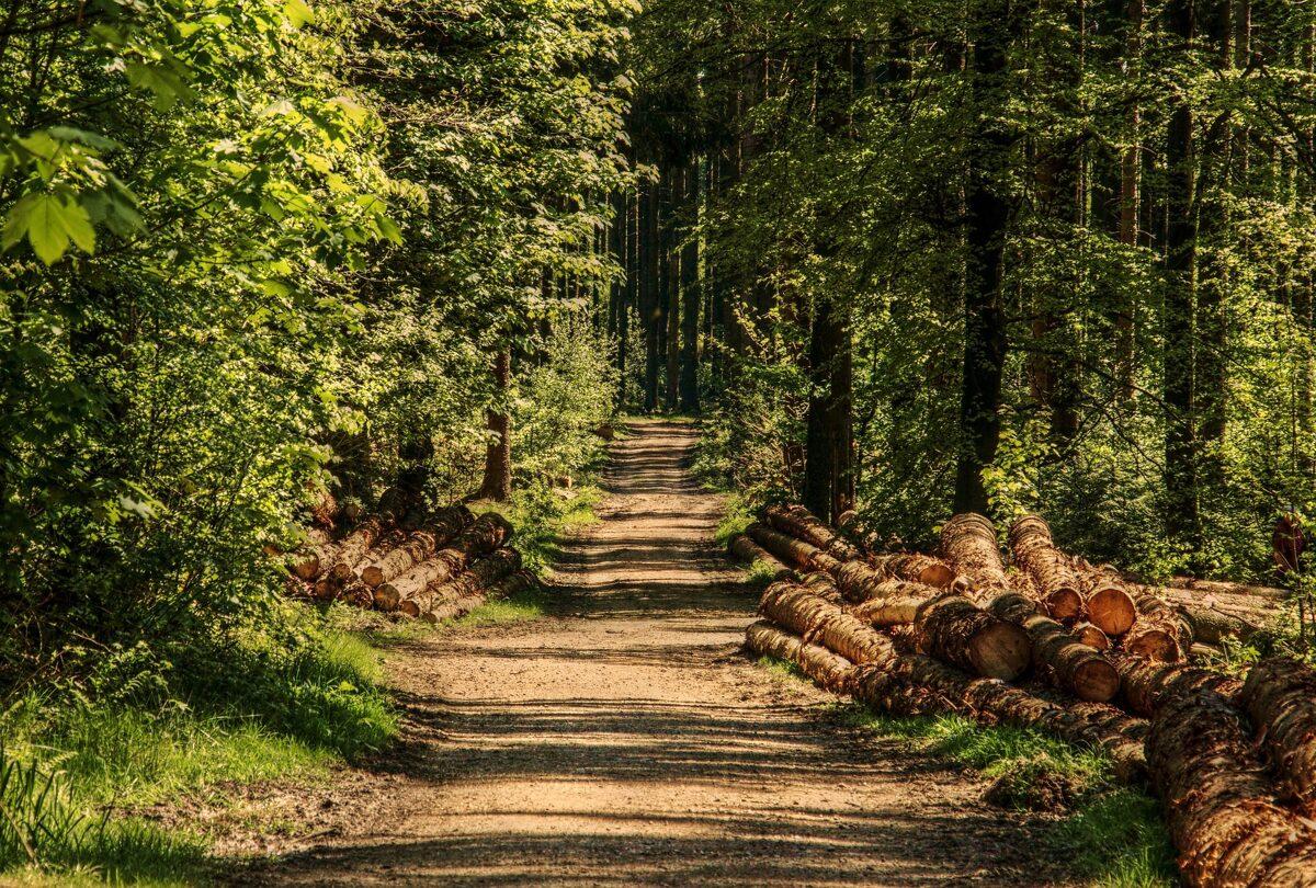 Meža īpašumu iegāde, pērk mežus